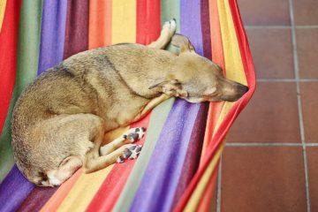 pes spí v látkovém závěsném křesle